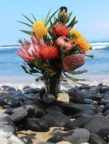 Kula Collection Protea