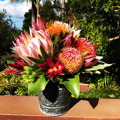 Fresh Maui Protea Flowers