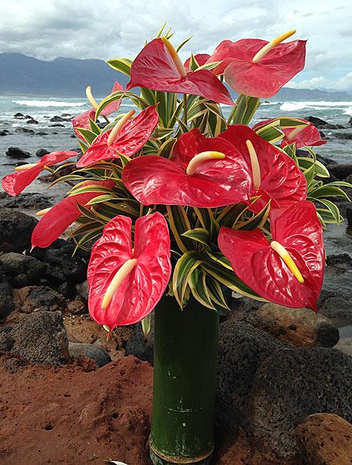 Maui Antherium Boquet