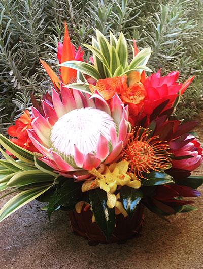 Maui Protea Flowers